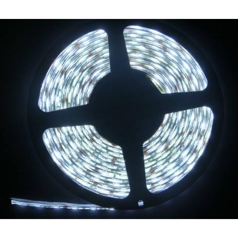 Taśma LED 60 LED/m Biała Zimna niewodoodporna IP20